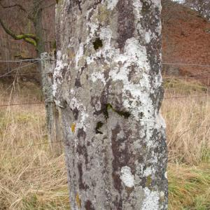 Priest's Stone, Perthshire