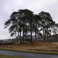 Pitnacree barrow and standing stone, Perthshire